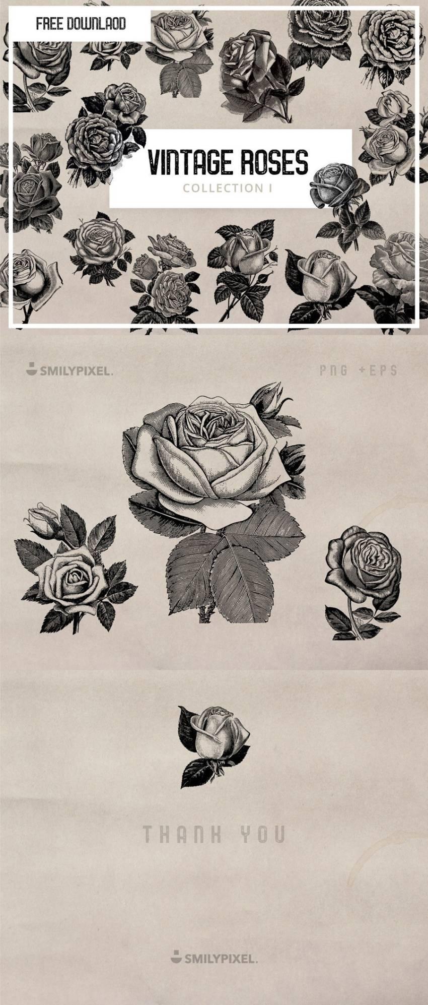 Vintage Roses Illustration (.Eps + .Png) скачать бесплатно